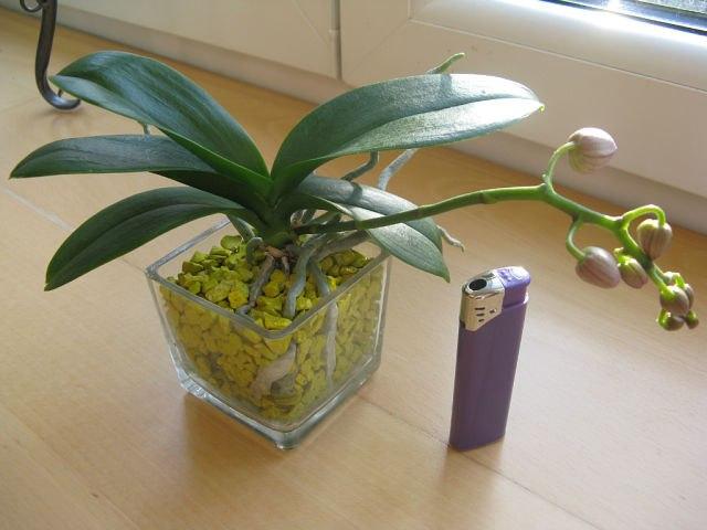 Можно ли сажать орхидею в обычный горшок 90
