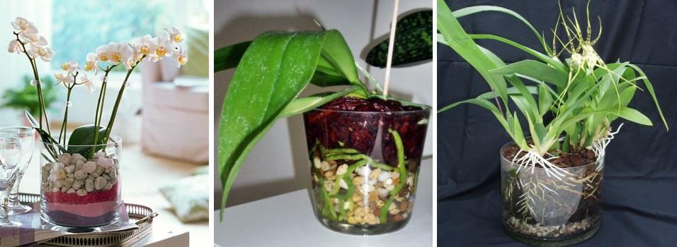 Посадка орхидей в стеклянные сосуды